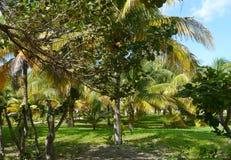 Palms beach summer holiday garden sun mexico Royalty Free Stock Photography