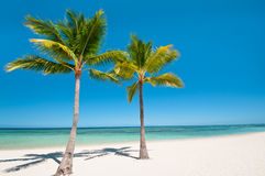 Palms and beach on tropical island. Two palms at the beach on tropical island Royalty Free Stock Photos