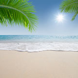 Palms and beach. View of nice tropical beach with some palms royalty free stock images