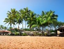Palms on a beachfront Stock Image