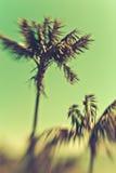 Palms in Beautiful Island Paradise Royalty Free Stock Photo