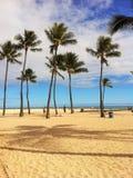 Palms on the Hawaiian beach. Beautiful  palms on the beach in Honolulu Hawaii Royalty Free Stock Image