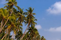 Palms and beautiful sky background royalty free stock photo