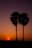 Palms on the beauty sunset sky background,Thailand Stock Photos