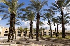 Palms Ben Gurion Air Port. Palms in Ben Gurion Air Port Israel Royalty Free Stock Photos