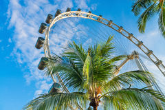 Palms and big ferris wheel Stock Images