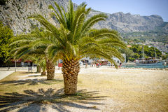Palms with big green leaves on the european beach on sunny holid Royalty Free Stock Images