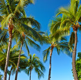 Palms and blue sky Royalty Free Stock Photo