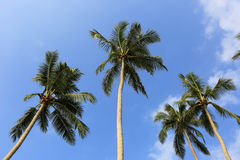 Palms and blue sky Stock Images