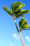 Palms on blue sky Stock Images