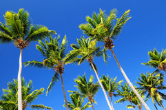 Palms on blue sky Stock Photo