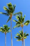 Palms on blue sky background royalty free stock photography