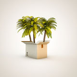 Palms in a box Royalty Free Stock Photos