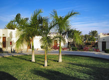 Palms and bungalow in Egypt Stock Image