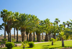 Palms in cactus garden at island Majorca, Balearic Islands, Spain. Palms in cactus garden at island Majorca, Balearic Islands, Spain Stock Photography