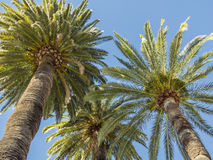 Palms in Cap Martin Royalty Free Stock Image