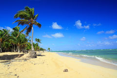 Palms on caribbean beach, Punta Cana Royalty Free Stock Images