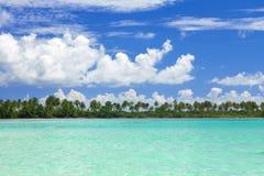 Palms on caribbean sea coastline Royalty Free Stock Photography