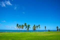 Palms on Caribbean Shoreline Stock Photo