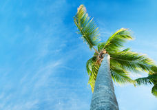 Palms and Caribbean sky Royalty Free Stock Photo