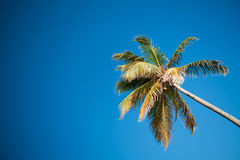 Palms and Caribbean sky Royalty Free Stock Images