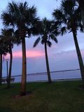 Palms catching afternoon breeze. Palms catching afternoon, old, fishing, pier, looking, over, lake royalty free stock photo
