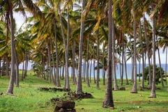 Palms - Chile Stock Photos