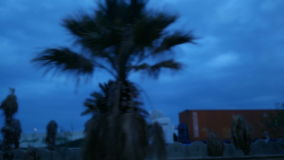 Palms in the city center at dawn time stock footage