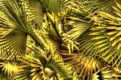 Palms close-up Stock Photos