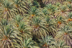 The palms close up Stock Photo