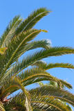 Palms - Close-up view Royalty Free Stock Image