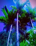 Palms stock photos