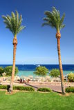 Palms and coral reef. Sharm El Sheikh. Red Sea. Egypt Royalty Free Stock Images