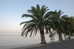 Palms in Croatia Stock Photo