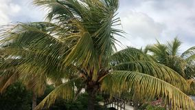 Palms in Curacao stock video
