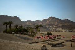Palms, Dead Sea Stock Photos