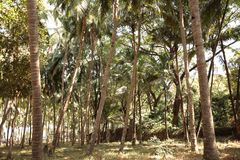 Palms and deciduous trees in the forest Stock Image