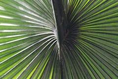 Palms at Denver Botanic Gardens stock image