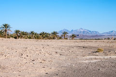 Palms and desert Royalty Free Stock Photos