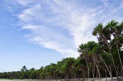 Palms and sky Royalty Free Stock Photography