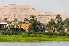 Palms and dwelling houses on the banks of the Nile. In Egypt Royalty Free Stock Image