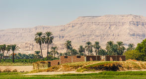Palms and dwelling houses on the banks of the Nile. In Egypt Royalty Free Stock Photography