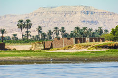 Palms and dwelling houses on the banks of the Nile Royalty Free Stock Photos