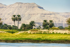 Palms and dwelling houses on the banks of the Nile Stock Photos