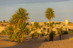 Palms On The Edge Of The Merzouga Village Royalty Free Stock Photography