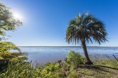 Palms on El Palmar National Park, Argentina Stock Photo