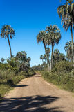 Palms on El Palmar National Park, Argentina Royalty Free Stock Photos