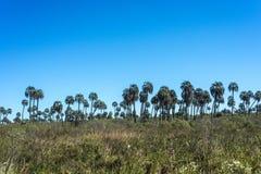 Palms on El Palmar National Park, Argentina Stock Photography