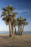 Palms on the empty beach Royalty Free Stock Photography