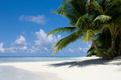Palms on empty idyllic tropical sand beach Royalty Free Stock Photography